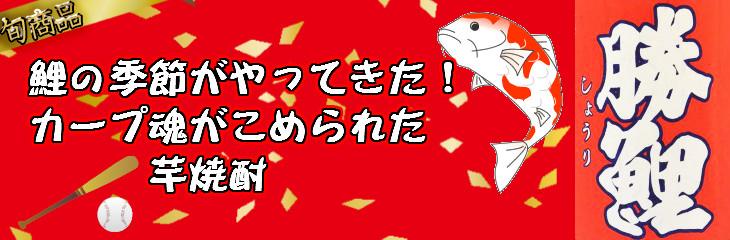 鯉の季節 勝鯉
